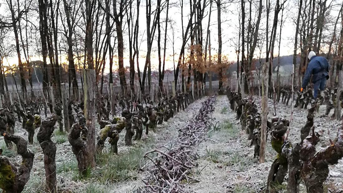 Vignobles Maurin - Travaux hiver 2018