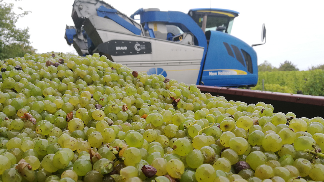 Machine à vendanger - vendanges 2018