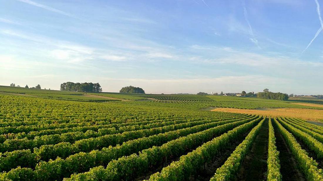 Visite Vignobles Maurin à bordeaux